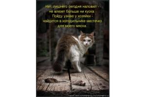 Смотреть картинки про котят 3
