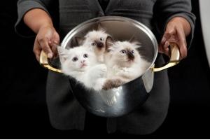 Смотреть картинки про котят 4