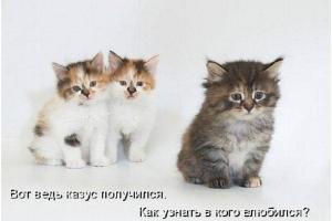 Смотреть картинки про котят 5