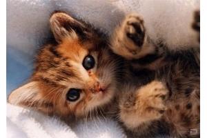 Смотреть картинки про котят 6
