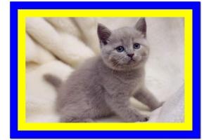 Смотреть картинки про котят 7