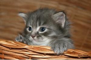 Смотреть картинки про котят 8