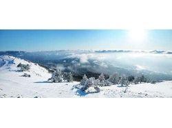 Панорамные фото леса