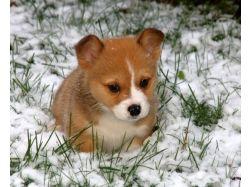 Зима звери картинки