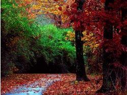 Фото осень в лесу