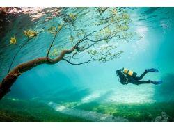 Подводный мир озер фото
