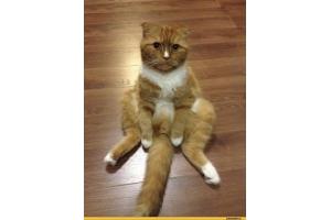 Кот из шрека картинки