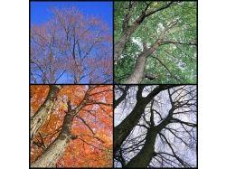 Картинки зимы лета осени весны