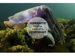 Подводный мир картинки в хорошем качестве