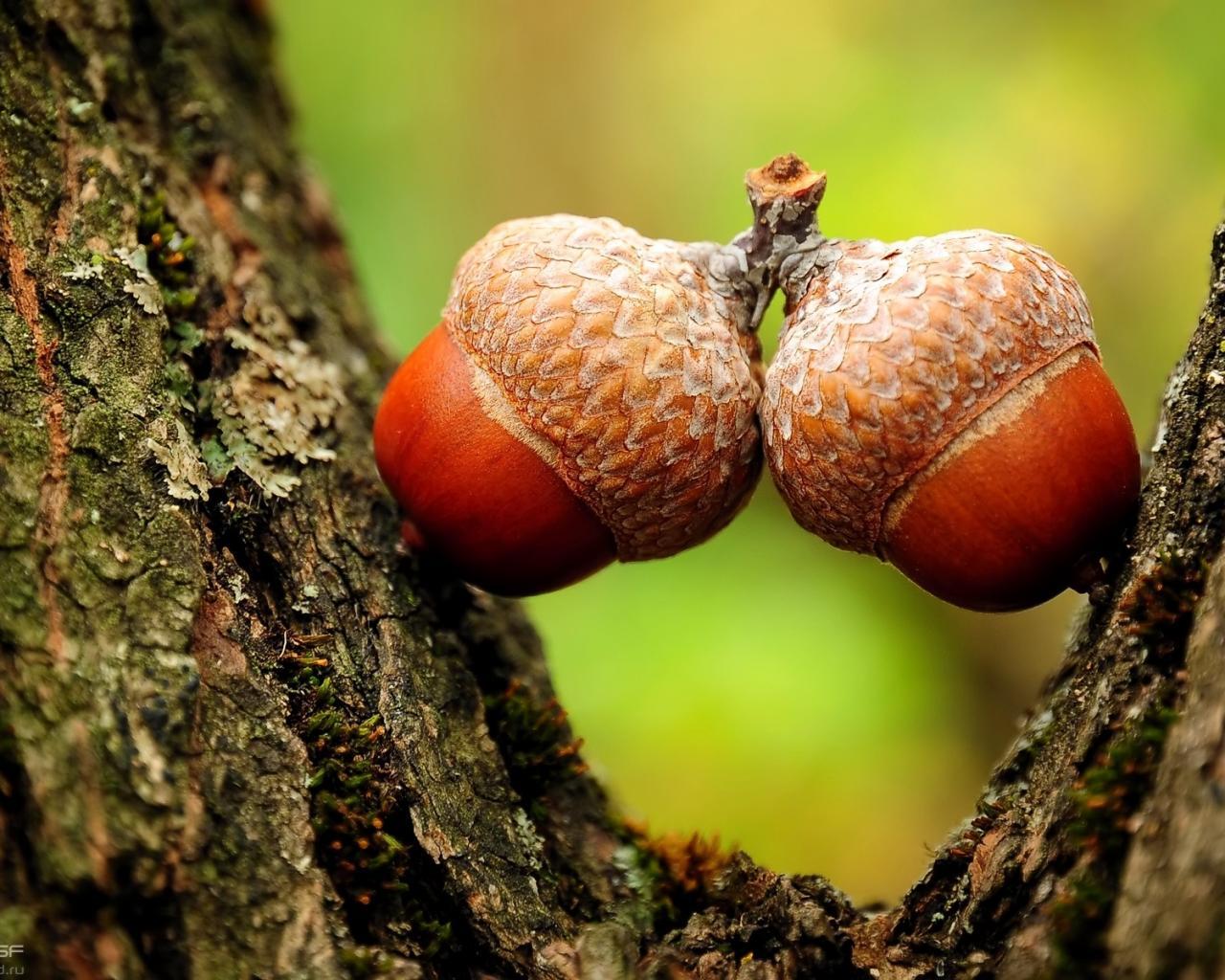 картинки осени листья орехи желуди тучка дождь грибы