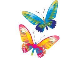 Картинки бабочки красивые на белом фоне