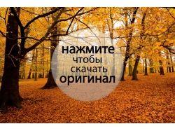 Осень фотографии скачать