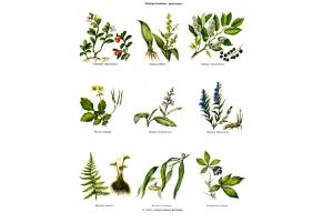 Растения картинки