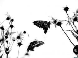 Стереокартинки черно белые