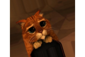 Кот из шрека глаза