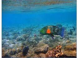 Подводный мир карибского моря фото