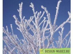 Бесплатные картинки зимы