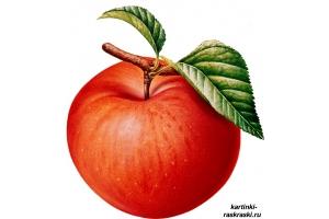 Картинка яблоко 2