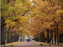 Фото осень царское село 7