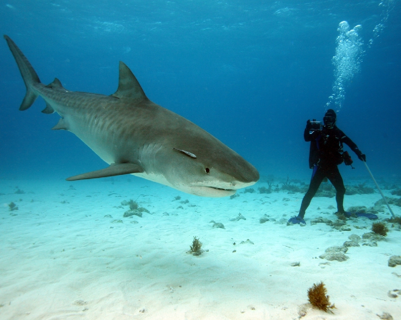 все картинки с акулами выборе нужно