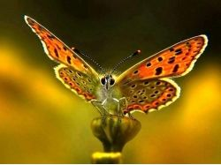Макро фото бабочек