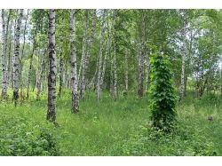 Макро фотографии в лесу