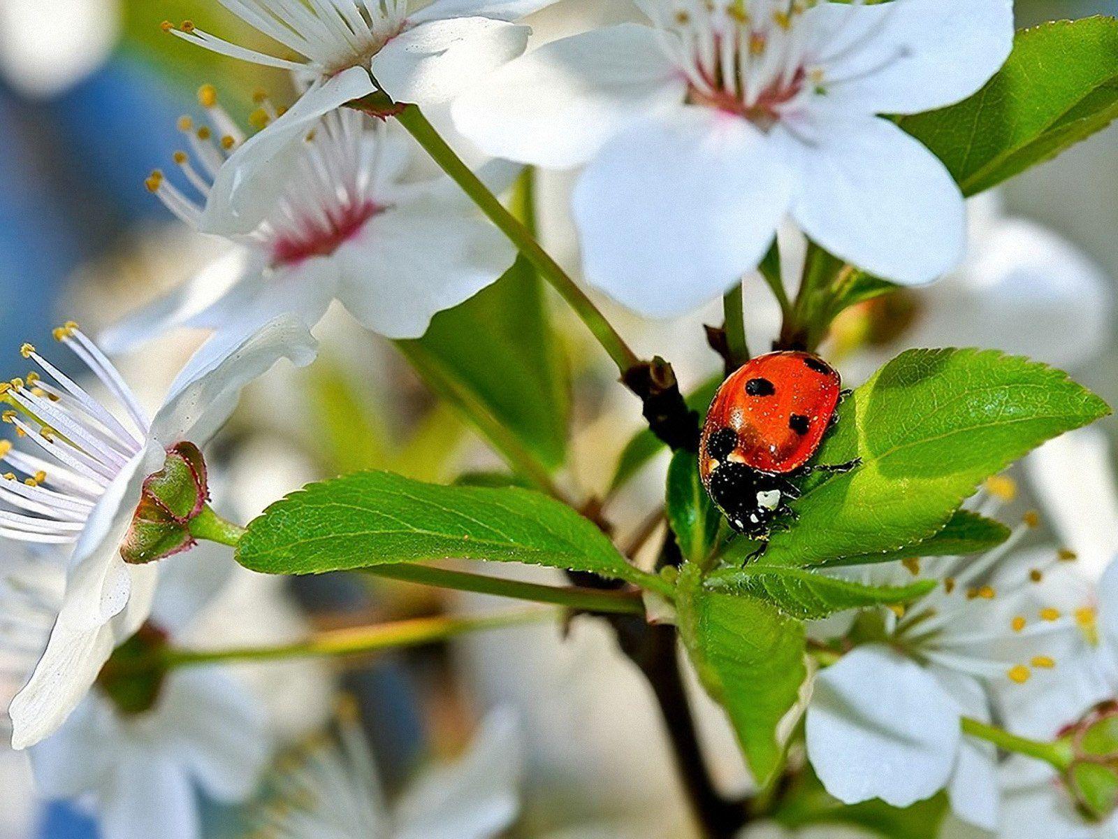 природа бабочка цветы животные насекомые роса без смс