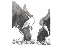 Стереокартинки две картинки 7