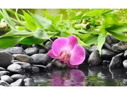 Картинки вода и цветы 7