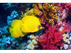 Красное море иего подводный мир