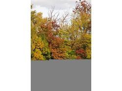 Природа фотографии осень 7