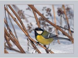 Большая райская птица - раскраски для детей 7