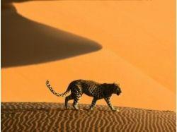 Тигры картинки 3d