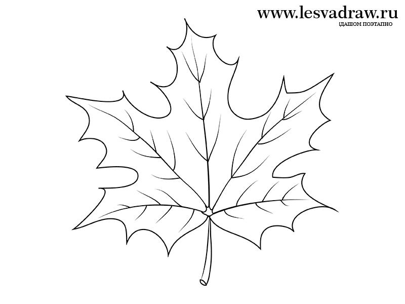Картинка осеннего дуба