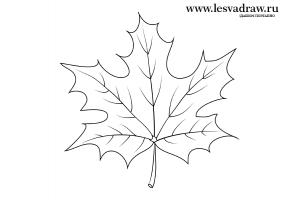 Кленовый лист контур
