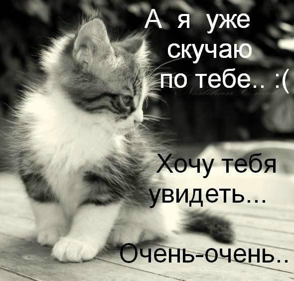 я скучаю по тебе картинки с котятами фото вверху