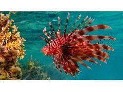 Фотографии подводный мир