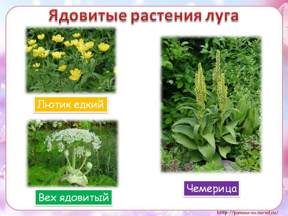 ход растения луга картинки с названиями алёне вовсе нравится