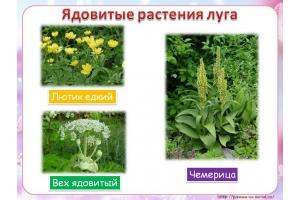 Растения луга в картинках с названиями