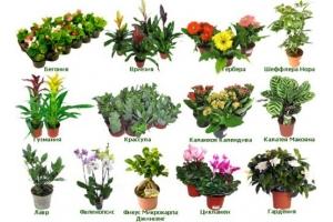Растения луга в картинках с названиями 3
