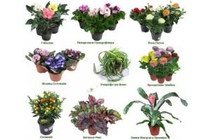 Растения луга в картинках с названиями 4