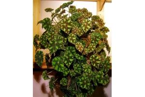 Растения луга в картинках с названиями 5