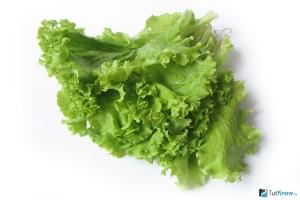 Салат латук фото