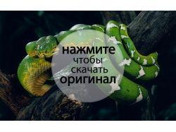 Широкоформатные фотографии животные 7