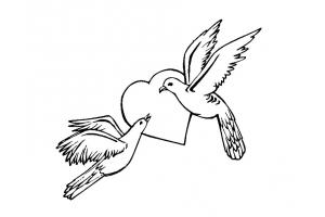 Раскраска голубь 4