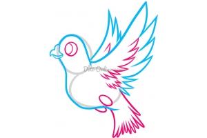 Раскраска голубь 5