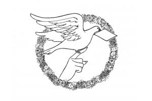 Раскраска голубь 7