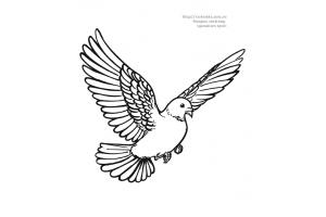 Раскраска голубь 8