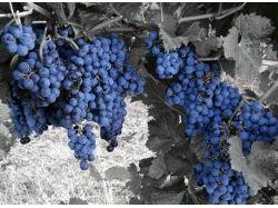 Овощи-фрукты фото