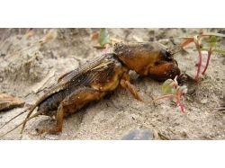 Ужасные насекомые фото 7